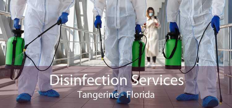 Disinfection Services Tangerine - Florida