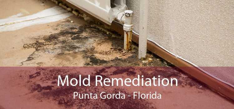 Mold Remediation Punta Gorda - Florida