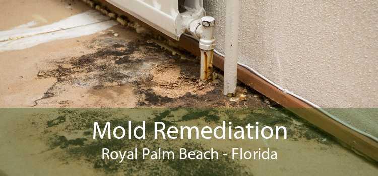 Mold Remediation Royal Palm Beach - Florida