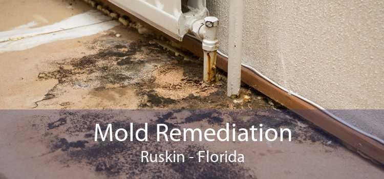 Mold Remediation Ruskin - Florida
