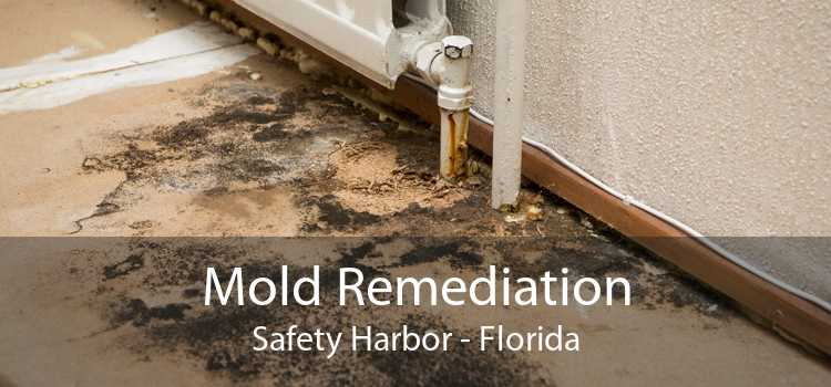 Mold Remediation Safety Harbor - Florida