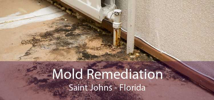 Mold Remediation Saint Johns - Florida