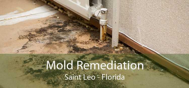 Mold Remediation Saint Leo - Florida