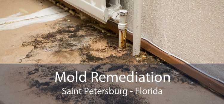 Mold Remediation Saint Petersburg - Florida