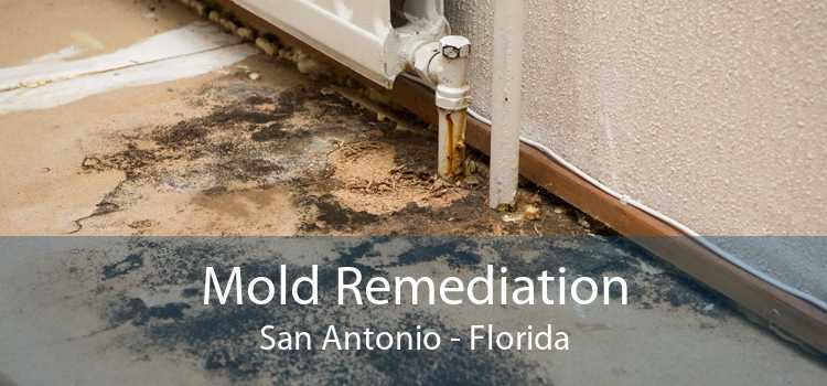 Mold Remediation San Antonio - Florida