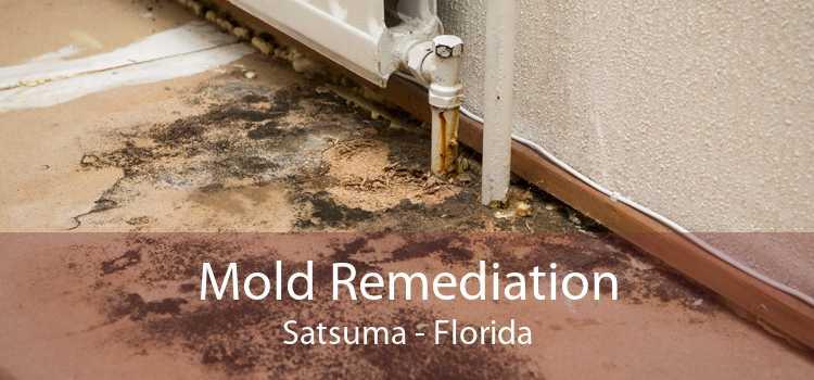 Mold Remediation Satsuma - Florida