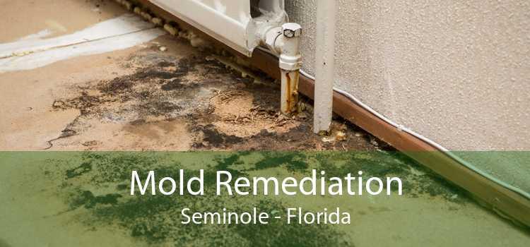 Mold Remediation Seminole - Florida