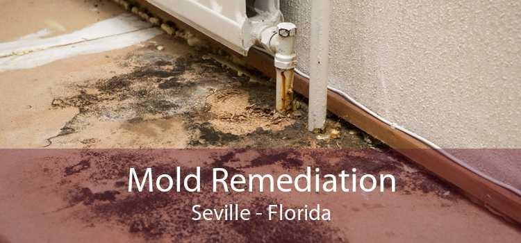 Mold Remediation Seville - Florida