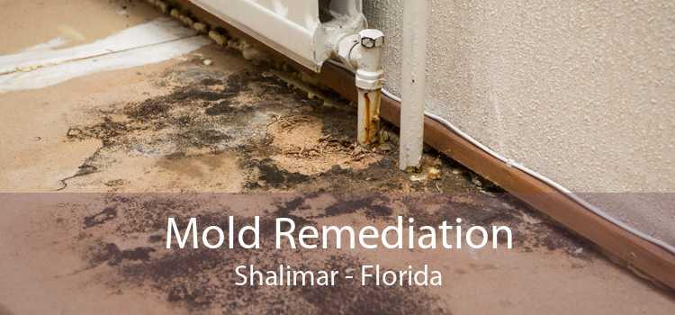Mold Remediation Shalimar - Florida