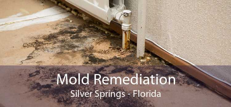 Mold Remediation Silver Springs - Florida