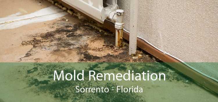Mold Remediation Sorrento - Florida