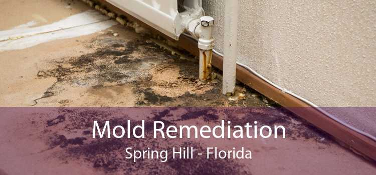 Mold Remediation Spring Hill - Florida
