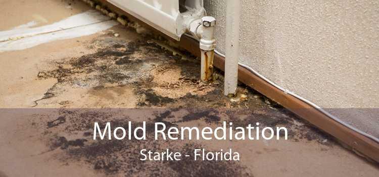 Mold Remediation Starke - Florida