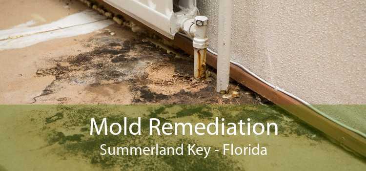 Mold Remediation Summerland Key - Florida