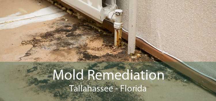 Mold Remediation Tallahassee - Florida