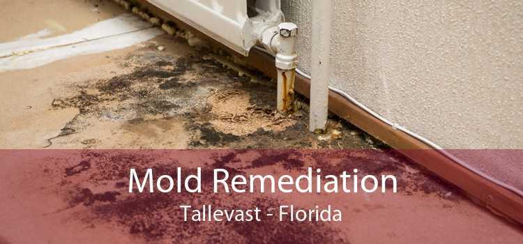 Mold Remediation Tallevast - Florida