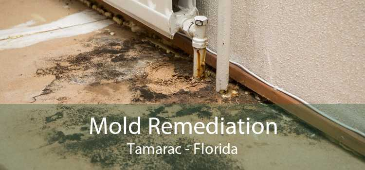 Mold Remediation Tamarac - Florida
