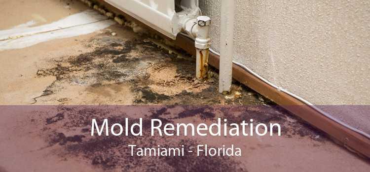 Mold Remediation Tamiami - Florida