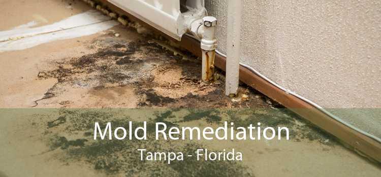 Mold Remediation Tampa - Florida