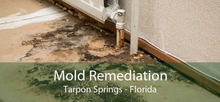 Mold Remediation Tarpon Springs - Florida