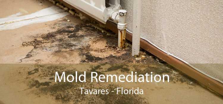 Mold Remediation Tavares - Florida