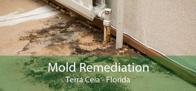 Mold Remediation Terra Ceia - Florida
