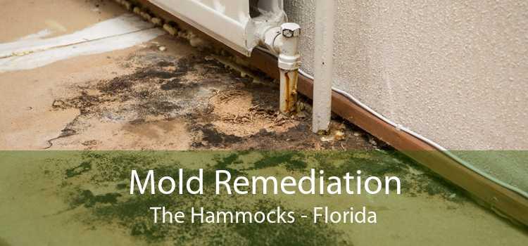 Mold Remediation The Hammocks - Florida