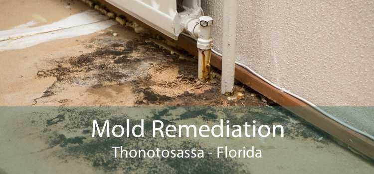 Mold Remediation Thonotosassa - Florida