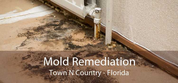 Mold Remediation Town N Country - Florida