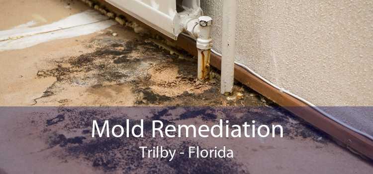 Mold Remediation Trilby - Florida