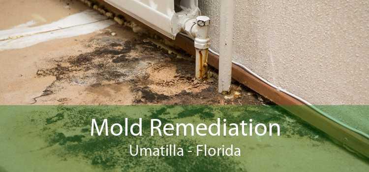 Mold Remediation Umatilla - Florida