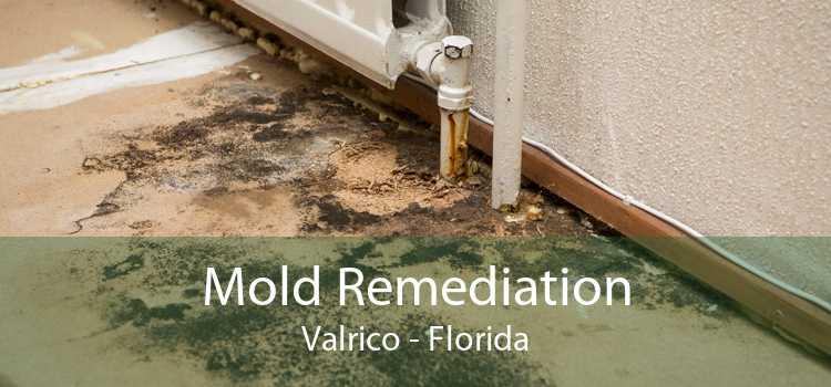 Mold Remediation Valrico - Florida
