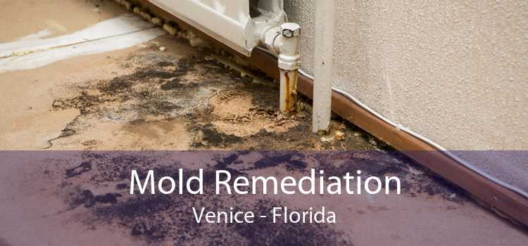 Mold Remediation Venice - Florida