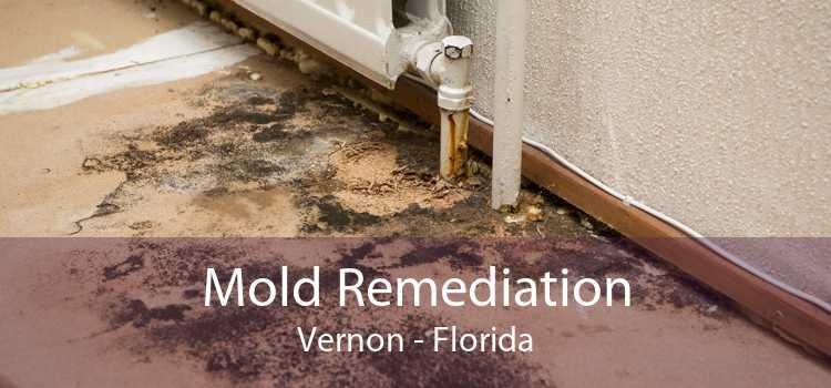 Mold Remediation Vernon - Florida