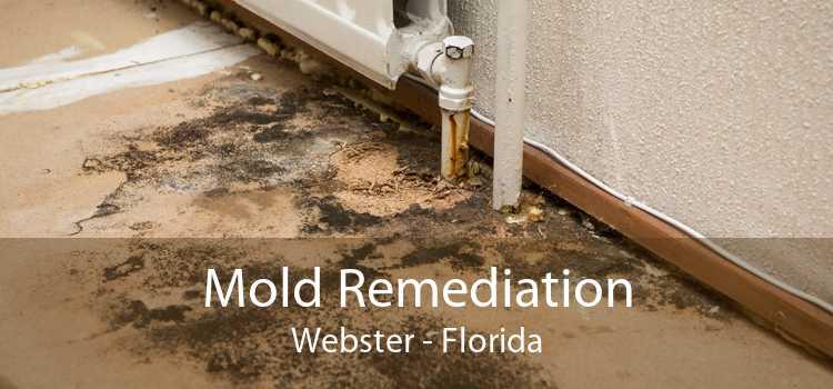 Mold Remediation Webster - Florida