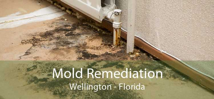 Mold Remediation Wellington - Florida