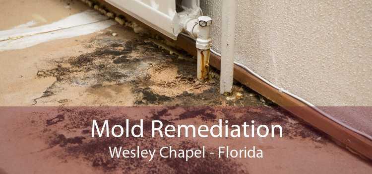 Mold Remediation Wesley Chapel - Florida