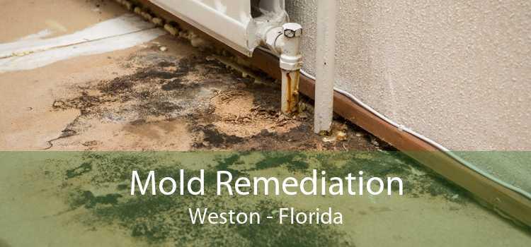 Mold Remediation Weston - Florida