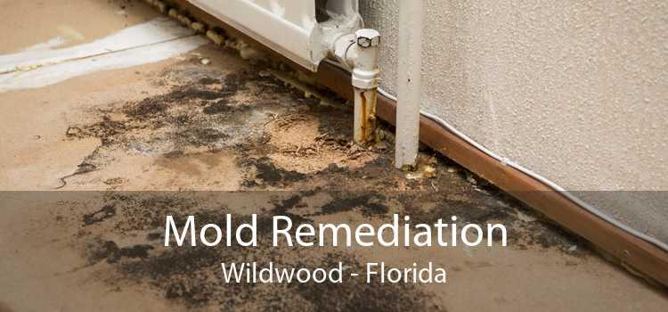 Mold Remediation Wildwood - Florida