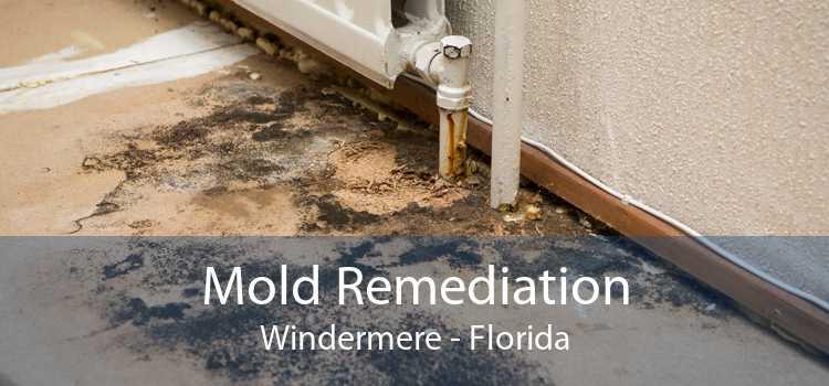 Mold Remediation Windermere - Florida