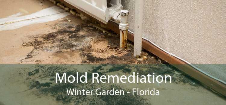 Mold Remediation Winter Garden - Florida