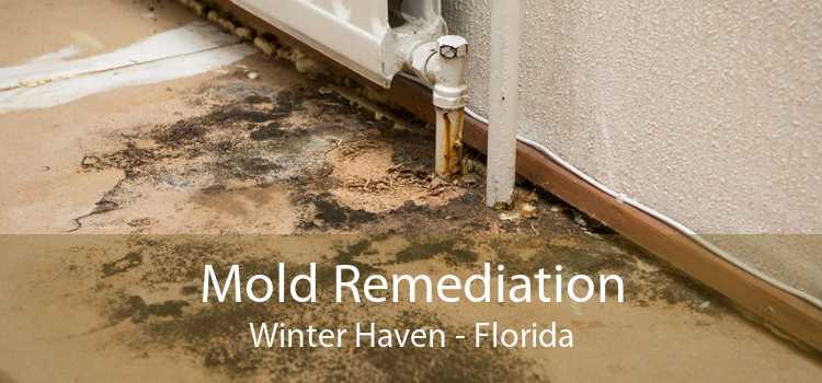 Mold Remediation Winter Haven - Florida