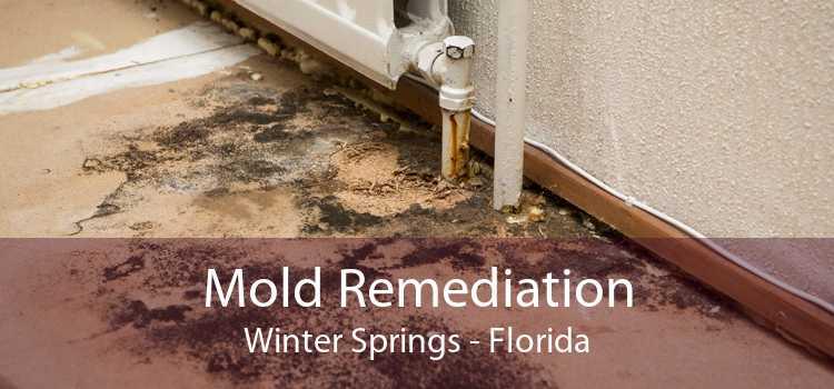 Mold Remediation Winter Springs - Florida