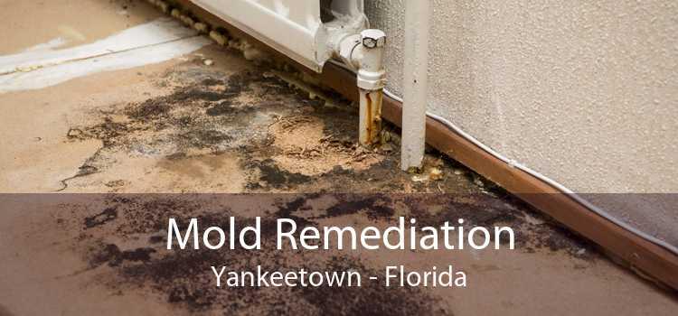 Mold Remediation Yankeetown - Florida