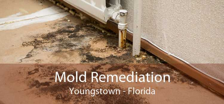 Mold Remediation Youngstown - Florida