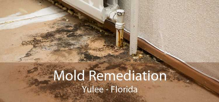 Mold Remediation Yulee - Florida