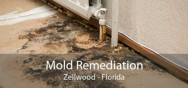 Mold Remediation Zellwood - Florida