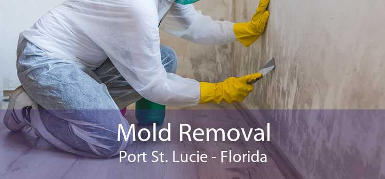 Mold Removal Port St. Lucie - Florida