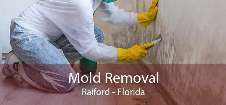 Mold Removal Raiford - Florida