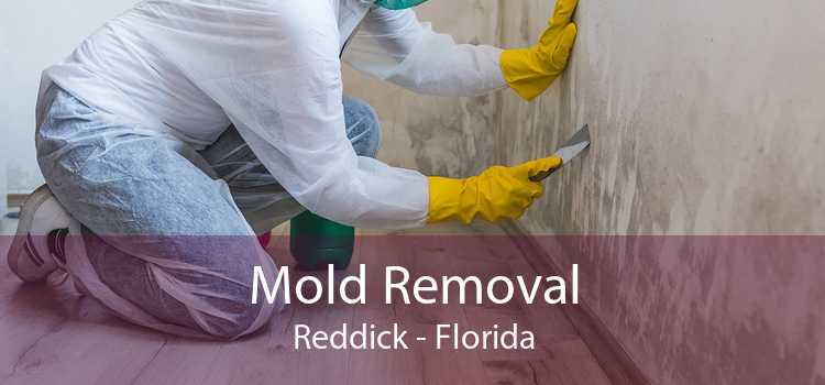 Mold Removal Reddick - Florida